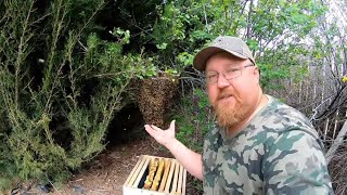 BEES TEACH OVER CONFIDENT BEEKEEPER A LESSON