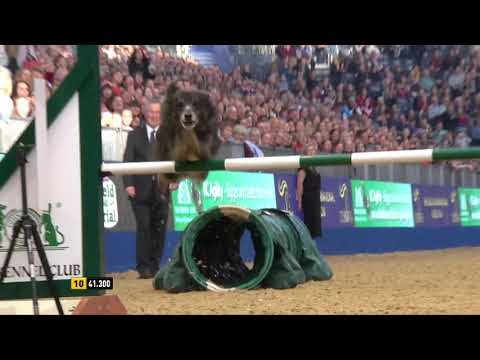The Kennel Club ABC Dog Jumping Grand Prix and Dog Agility Final at Olympia 2018