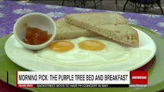 Morning Pick: The Purple Tree Bed And Breakfast