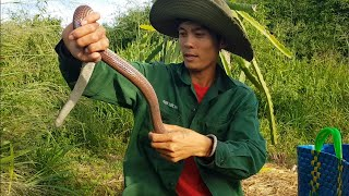 #20 Hoang Dã Bình Thuận   Địa điểm mới bí mật cực nhiều rắn của anh Sang