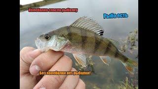 Без колебалки нет рыбалки Колебалка спасла рыбалку. Жор окуня