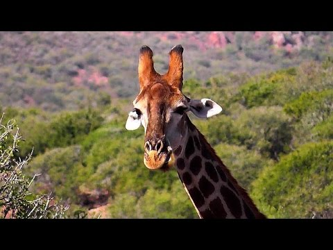 The Spirit of South Africa - Safari in the Little Karoo