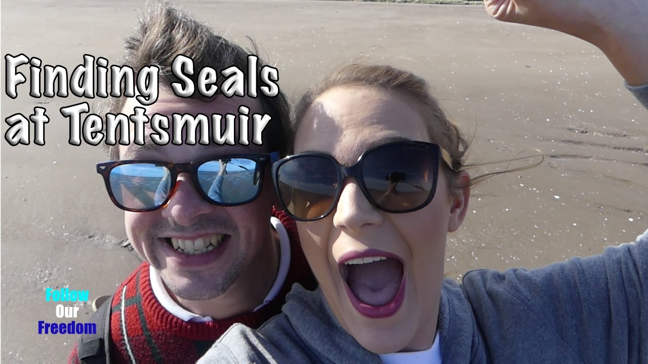 Finding Seals at Tentsmuir Forest u0026 Beach - Visit Scotland - VLOG 16 & Finding Seals at Tentsmuir Forest u0026 Beach - Visit Scotland - VLOG ...