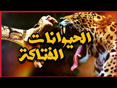 أقوى 7 حيوانات على الكرة الأرضية وأكثرها فتكاً || وثائقي حصري