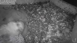 Webcam Turmfalken Eggstätt
