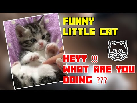 Funny Cat Video Compilation 2019 Try Not To Laugh Challenge 2019 Best videos funny cats #6