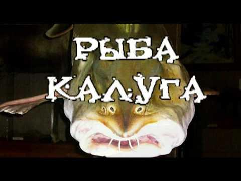 Амурская рыба Калуга