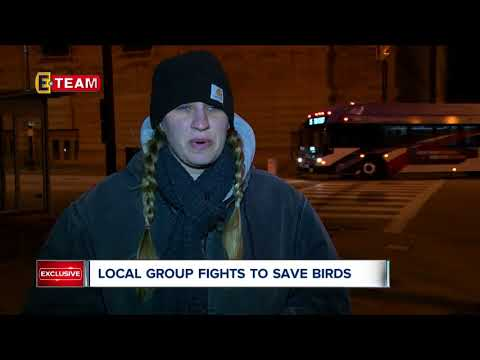 Local group wants downtown businesses to flip the switch to save migrating birds