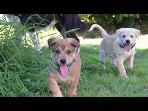 La historia del rescate de 3 cachorros