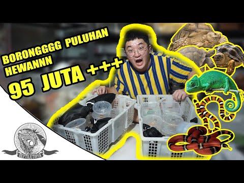 [SHOPEE LAZADA HAUL] Borong Sampai 14 Barang | INSAF KEJAP from YouTube · Duration:  16 minutes 34 seconds