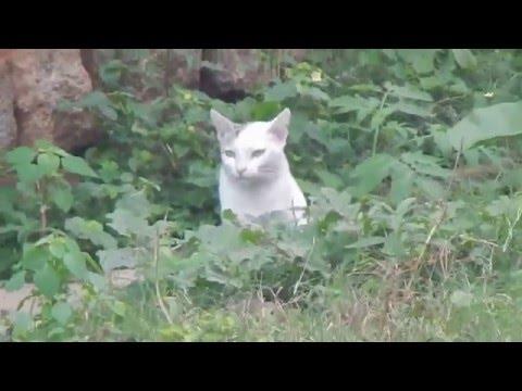Catching rat went up shocking cat attack