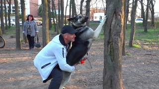 Умница Рада. Восточно-европейская овчарка. East European Shepherd.