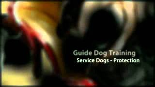 Dog Training Carlsbad Ca Dog Obedience Training