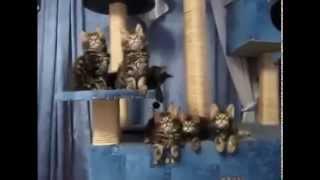 Лучшие приколы  Поющие котята