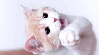 Смешные милые котята. Лучшие приколы 2017 с кошками котами щенками животными юмор