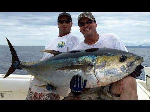 Hannibal Bank, Panama Fishing - 150# Yellowfin Tuna To The Gaff!