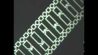 Биосинтез белков. Научфильм. (учебное видео СССР).
