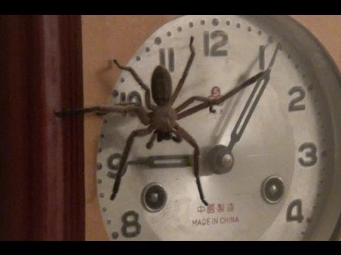 Clock Spider Youtube