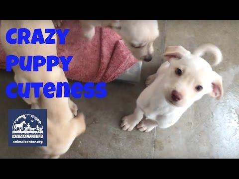 Crazy Puppy Cuteness!