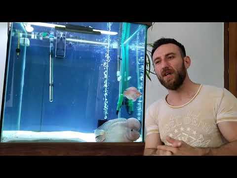 Lepistes balıkları hakkında bilgi