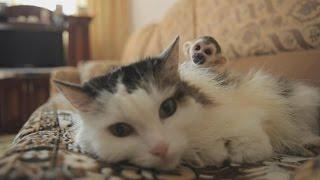 В России кошка стала приёмной мамой для обезьянки (новости)