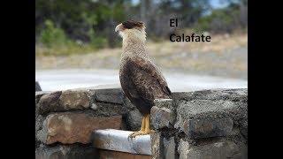 El Calafate 2018 reserva natural Laguna Nimez-glaciar perito moreno.