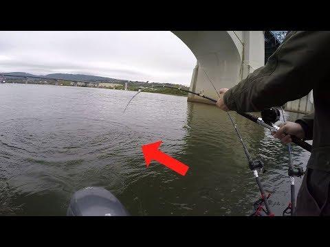 Fishing BRIDGES For Catfish - Catching Flathead And Blue Catfish On Bridge Pilings (Ft. Reel Beasts)