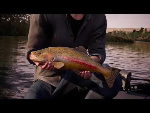 Fishing Sim World Pro Tour Lake Williams Tier 1 Part 1