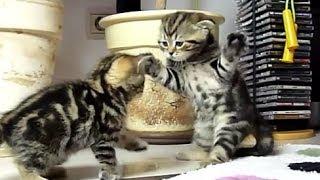 Cмешные видео про котят 21 -  2013-2014