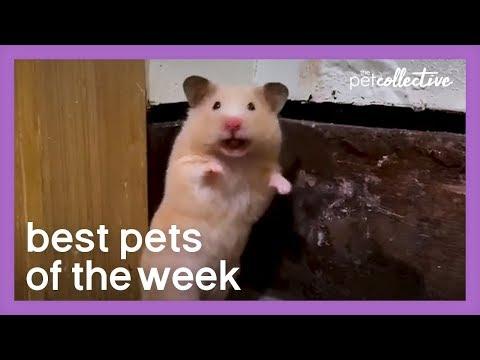 Social Distancing Hamster | Best Pets of the Week