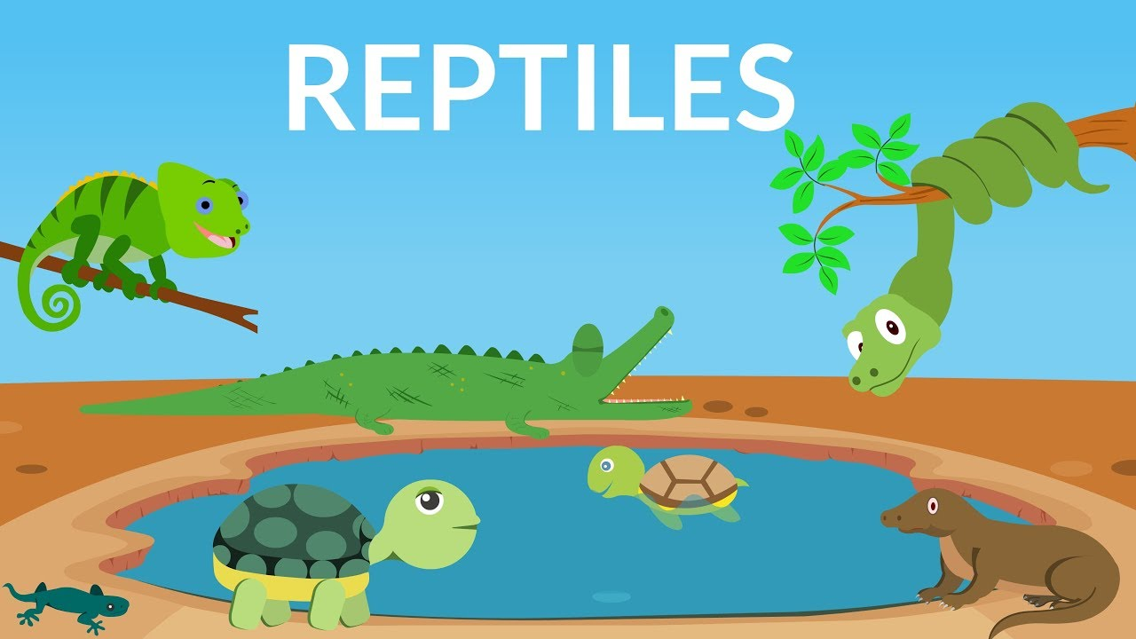 Learn about Reptiles    Reptiles Video for Kids - YouTube [ 720 x 1280 Pixel ]