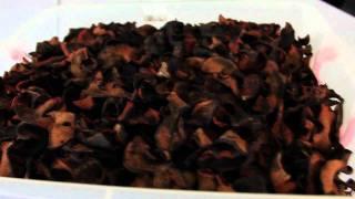 29  OTOP ผลิตภัณฑ์น้ำส้มแขกพร้อมดื่ม จ ภูเก็ต