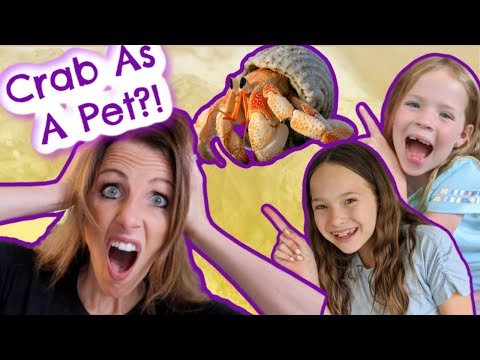Hermit Crab As A Pet?
