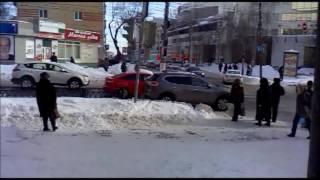 В центре Курска бездомные собаки создают угрозу ДТП
