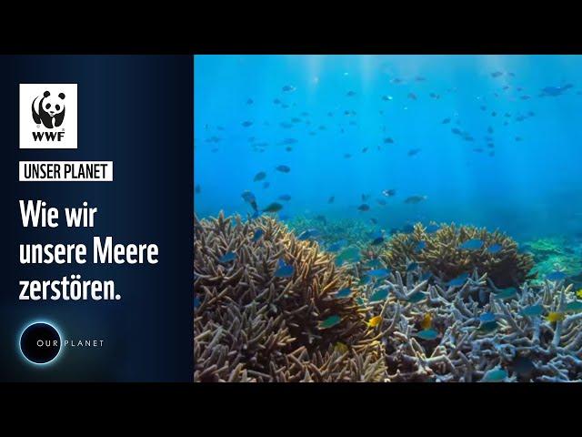 Wie wir unsere Meere zerstören | WWF Deutschland