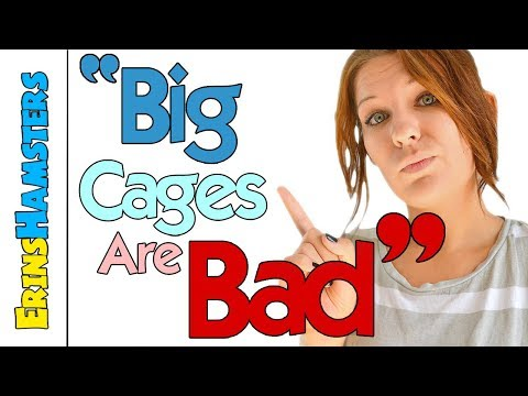 Are Big Cages Bad For Hamsters? | Myths & Misconceptions