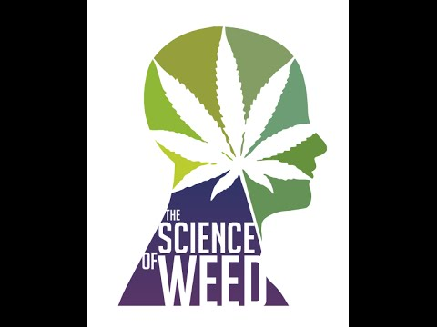 Marijuana's Mind-Altering Compound May Improve Memory