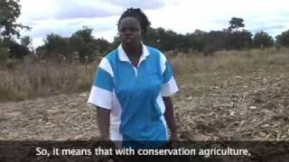 Conservation Agriculture in Zimbabwe