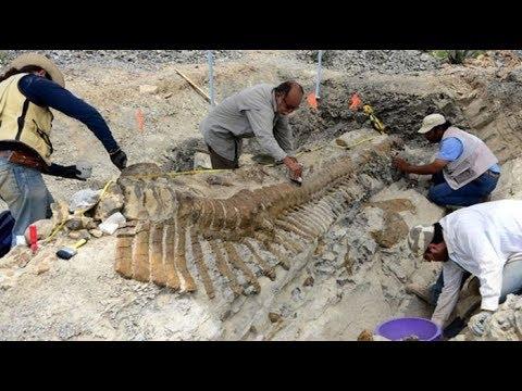 Самые удивительные находки, которые оказались динозаврами: От «воробушков» до древних гигантов