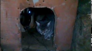 Собака и Кот в обной будке греются,и никто не хочет выходить!