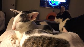 Watching a movie with the cats!! Some Q&A