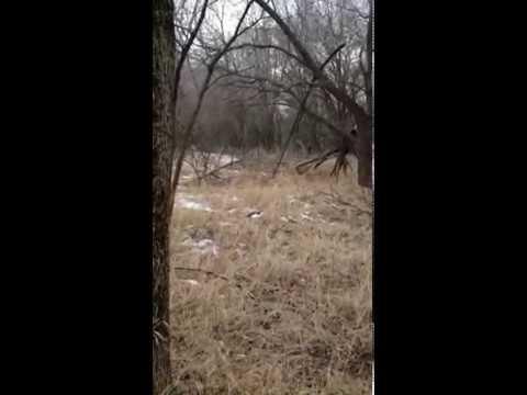 Bigfoot in Emmetsburg?