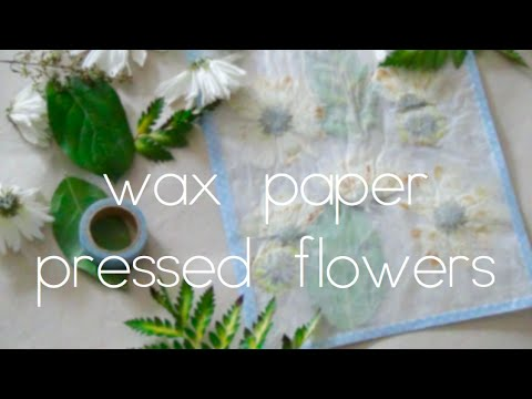 Wax paper pressed flowers youtube mightylinksfo