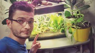 Дырки на листьях растений. Самодельный свет для аквариума. Светильник для вазонов
