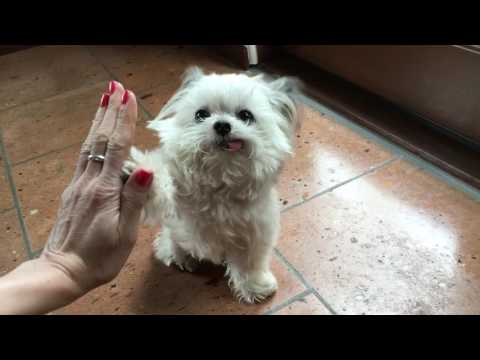 High Five for Awesomeness