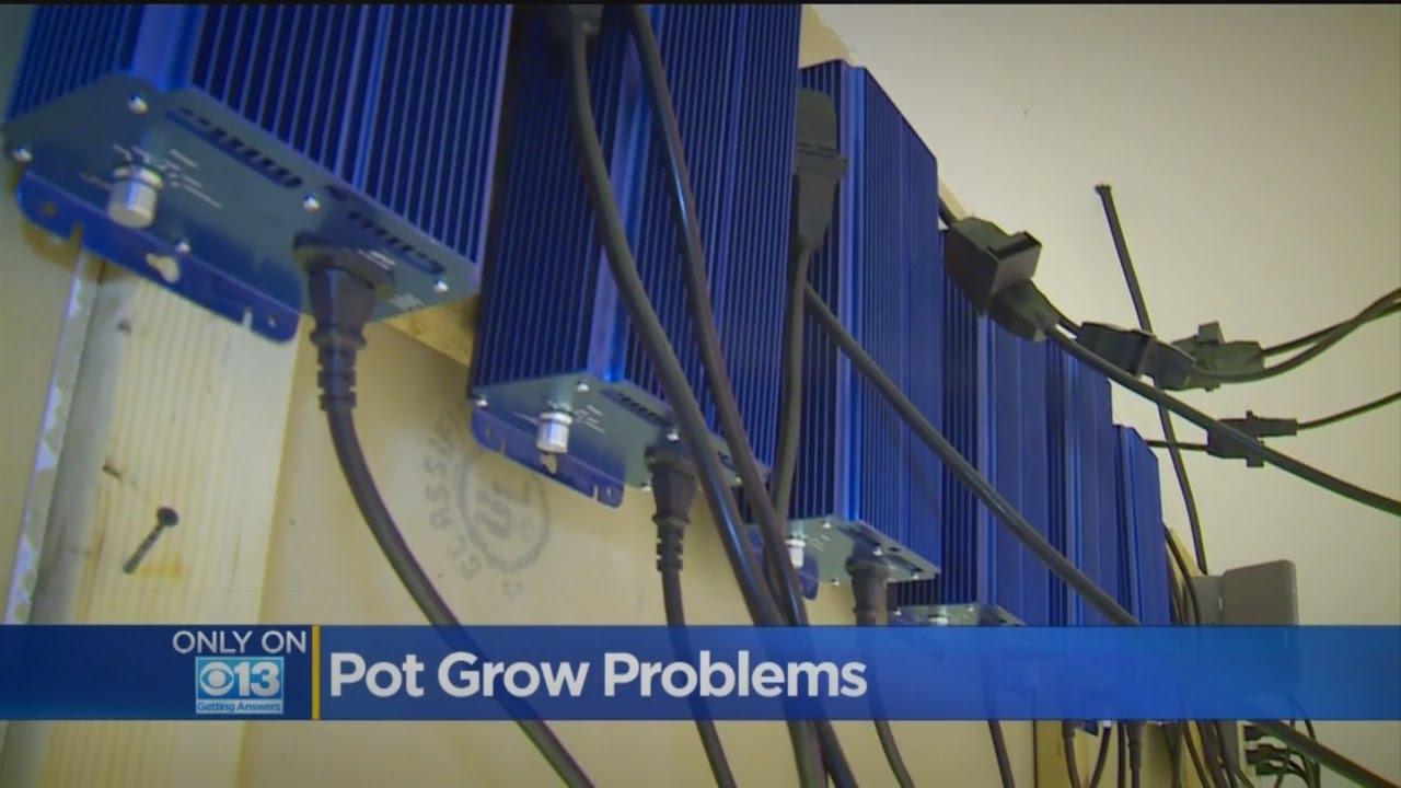 Illegal Marijuana Grow Operations On Rise In Sacramento Area
