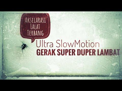 Download Akselarasi Lalat terbang - flies fly in Ultra Slow Motion Super Slower Fps FHD