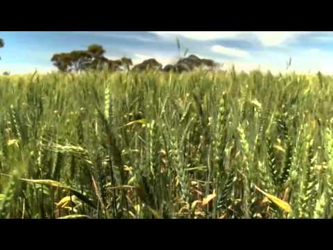 Crop Disease Application - Frank Henry