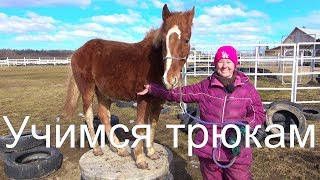 """Лошадь на """"тумбе"""". Как научить и зачем. Клёвый конь."""