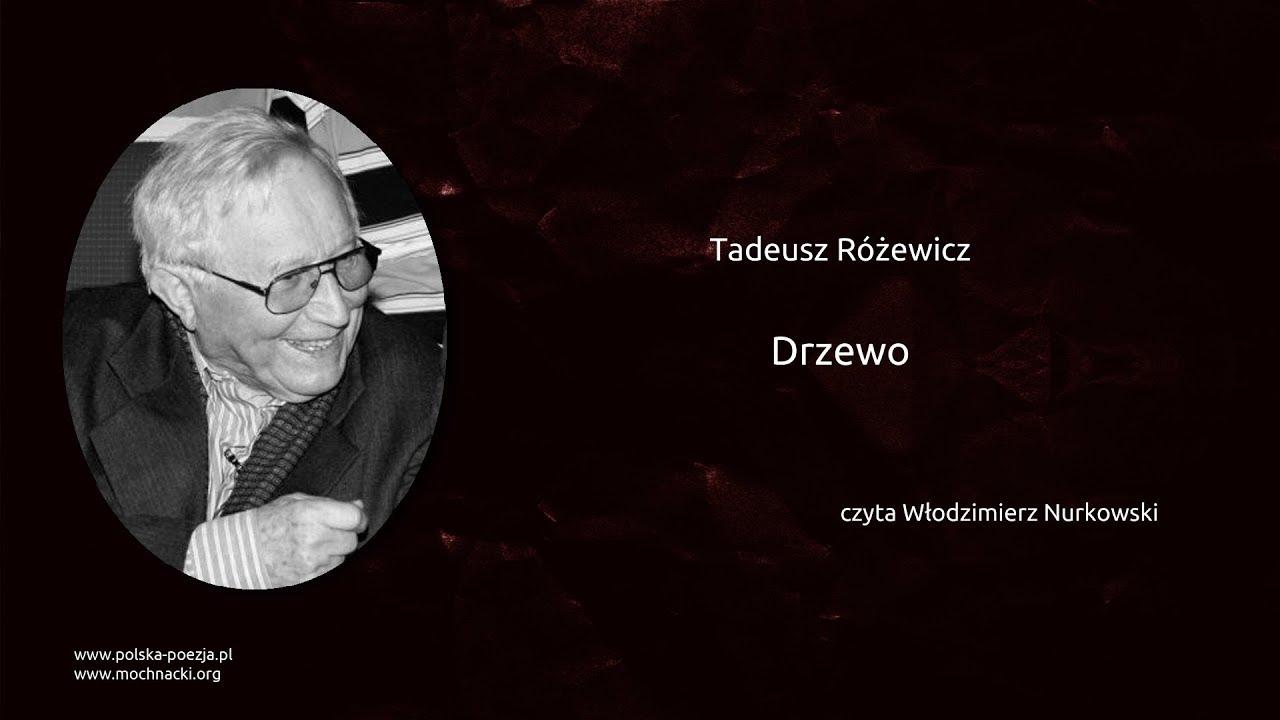 Tadeusz Różewicz Drzewo Polska Poezjapl